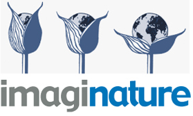 Imaginature
